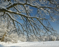Branches covered in snow.