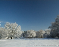 Virgin snow on Pewley Down.
